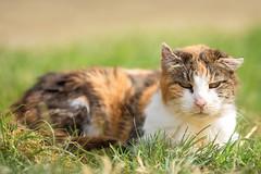'Sunshine Girl' (Jonathan Casey) Tags: rescue pact animal nikon d850 400mm f28 vr