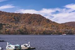 DSC_0281 (juor2) Tags: d750 nikon scene travel japan fukushima aizuwakamatsu lake pond maple autumn scenery volcano colorful