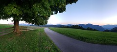The small road (Mi-Fo-to) Tags: panorama lanscape paesaggio alpino alps dolomites dolomiti sciliar tree albero strada stradina small street grass field campo erba