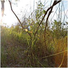 anselmo 60 (beauty of all things) Tags: italien toskana montespertoli anselmo flora quadratisch intothelight