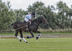 Flying (David Feuerhelm) Tags: rider horse nikkor action speed polo woman sport field lode cambridgeshire england nikon d750 200500mmf56