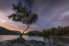 Lone Tree (Tony N.) Tags: unitedkingdom uk paysdegalles wales snowdonia llynpadarn padarn lac lake sunrise leverdesoleil levant tree lonetree alone mountains hills collines sky ciel nuages clouds poselongue longexposure nisi nisiprov5 nisicplpro nisignd8soft nisind1000 nikkor1635f4 nikon d810 vanguard tonynunkovics tonyn arbre paysage landscape eau water