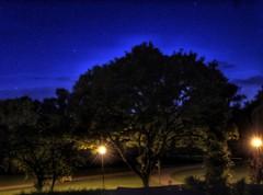 Starry lights, on a starry night!😊 (LeanneHall3 :-)) Tags: longexposure starrylights stars blue sky trees branches green leaves eastpark hull kingstonuponhull streetlamps landscape canon 1300d groupenuagesetciel