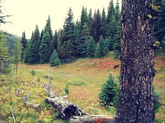 Canadian Alpines September Banff Park (Mr. Happy Face - Peace :)) Tags: trees hike banff alberta canada nature scenery landscape mountainair sky