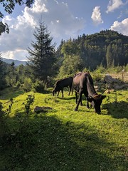(Vollcov) Tags: carpathians gorgany