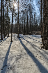 Spring at the Nevsky forest park. Long shadows of the trees. (g_reg_walker) Tags: morning sunny landscape scenery light nature domestic flora tree wild forest park nevsky russia leningrad district oblast saint petersburg spring sky blue clear travel trip walk snow shadow birch