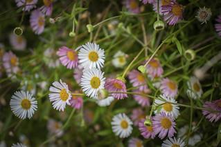 Lovely flowers ...