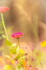 Vrijbroekpark (hasjhasj1) Tags: bloemen