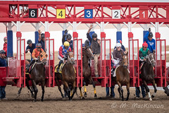 Century Downs Racetrack 2018 (tallhuskymike) Tags: centurydowns racetrack racing horse horses event outdoors balzac race thoroughbred 2018