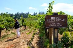 """inspector domi"" (BPPrice) Tags: winecountry cabernet vineyard grapes grapevine estate healdsburg sonoma drycreekvalley winery pezziking vine wine"