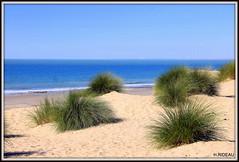 Plage de MONTALIVET (Les photos de LN) Tags: plage beach montalivet nouvelleaquitaine gironde sudouest médoc nature paysage végétation sable
