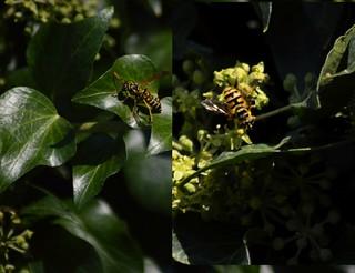 2 gelbe Insekten