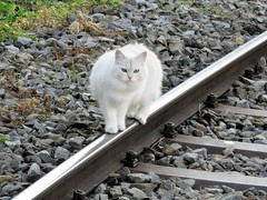 Chats Ferrovipattes (Trams aux fils (Alain GAVILLET)) Tags: chats rack