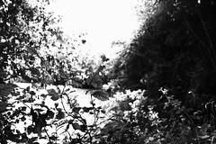 IMG_2426 (salome.de) Tags: blackandwhite blackandwhitepicture photography photo photographie profile pic picture portrait noiretblanc grain colorpicture paysage landscape focus nature naturel feuille forêt verdure plante lunette glasses reflect sun light feuillage buisson