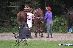 am_polo_cup18_0183 (bayernwelle) Tags: amateur polo cup gut ising september 2018 chiemgau bayern oberbayern pferd pferdesport reiter bayernwelle foto fotos oudoor game horse bavaria international reitsport event sommer herbst