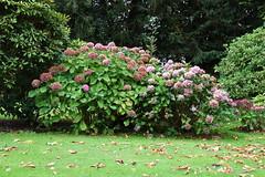 DSC_1688 (PeaTJay) Tags: nikond750 langrishhousehotel hampshire manorhouse hotels gardens outdoors nature flora fauna plants trees bushes lakes grass grasses flowers