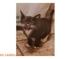 ADOPCIÓN RESPONSABLE!! (Leales.org • tu guía animable) Tags: adopta adoptar adoptanocompres noalmaltratoanimal adopción sebusca extraviado perdido perro gatos lealesorg