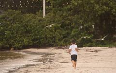 The Joy of Childhood (AngelaC2009***) Tags: 2018 august summer florida tampabay ruskin littleharbor child beach seagulls childhood joy canoneosrebelxt