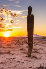 Desert Morn (O.S. Fisher) Tags: arizona hd beautiful cactus clouds desert landscape morning mountains peaceful silhouette sky sunrise