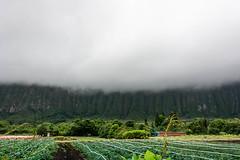 _DSC0598 (camlaque) Tags: 2018 hawai voyage