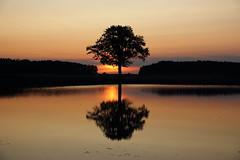 IMG_3980 (geraldtourniaire) Tags: schärfentiefe sonnenaufgang canon baum eos6d ef 24105l mittelfranken 6d landschaft licht l natur nature