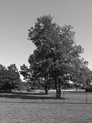 Fence & Tree (B&W) (neukomment) Tags: bw blackwhite parks michigan august 2018 summer dogs android