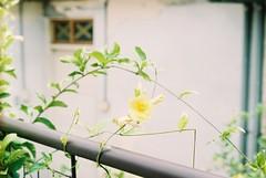 CNV000007 (tzu104107) Tags: nikon f3hp fujifilm film superia200 seriese 50mm f18