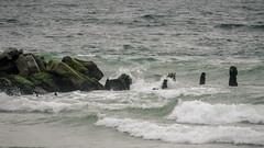 Belmar_Pro_9_7_2018-1 (Steve Stanger) Tags: surfing belmarpro belmar nj competition beach ocean jerseyshore jesey newjersey olympus olympusm1442mmf3556ez