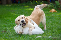 touchdown (D.Reichardt) Tags: europe germany animal dogs playing fun