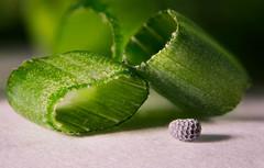 Allium... (Altazur) Tags: abstract allium cebollino food green cut vegetables sidelit