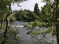 River Ness #inverness #scotland #Ecosse #highlands #river #nessisland #nature #peace (audreyplum) Tags: inverness scotland ecosse highlands river nessisland nature peace
