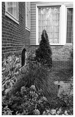 OM2n_35mm_BW_XX_033.jpg (Tony Roman Photography) Tags: ff1monobath om2n bwxx 35mm blackandwhite