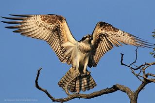 osprey redo