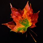 Autumn beauty thumbnail