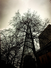 Tammy's Day in London - 16 (Hanzlers Warped Visions) Tags: london guyshospital trees tree abstract tower skyscraper manmade construct invasion invade impose encroach theshard branches branched stripped naked bere bear inky pollock nature juxtaposed conflict