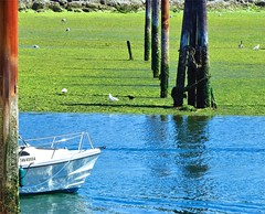 Low Tide - Marea Baja (Konny :-))) Tags: lowtide ebbe maréebasse bassamarea mareabaja baixamar laskuvesi άμπωτη отлив приливноетечение corrientedemarea tidalcurrent gull möve gabbiano mouette gaviota gaivota