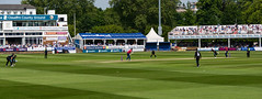 #147 A day at the cricket (tokyobogue) Tags: england uk 365project nikon nikond7100 d7100 sigma sigma1750mmexdcoshsm cricket sports game royallondoncup essex surrey chelmsford