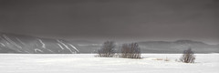 Ile d'Orléans, Québec, Canada (Tasmanian58) Tags: trees arbustes bosquet champs field snow neige montagnes mountains ski skiing fog mist clouds quebec canada sony a7ii landscape vintage lens distagon contax zeiss 2825mm 25mm