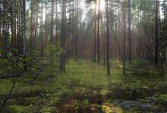 In the forest (dmilokt) Tags: природа nature пейзаж landscape лес forest дерево tree dmilokt nikon d750 beginnerdigitalphotographychallengewinner
