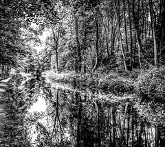 The Cromford Canal (Peter Leigh50) Tags: derbyshire canal fujifilm fuji xt2 water reflection trees towpath mono monochrome blackandwhite bw black white