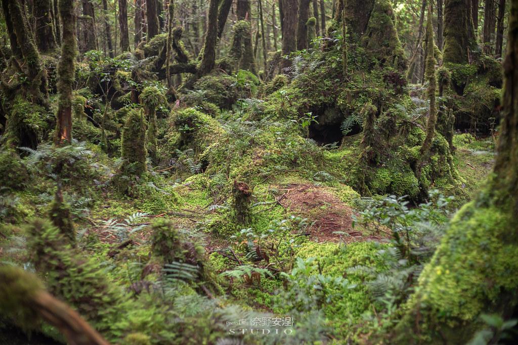 太平山翠峰湖環山步道 |走在泥濘的道路上,只為途中美景 | 宜蘭大同鄉32