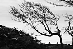 ciclista (Alejandro...) Tags: bicicleta arbol caballo ciclista argentina tierradelfuego findelmundo endofworld patagonia patagonian ushuaia paisaje landscape forest bosque bnw bw blancoynegro blackandwhite monoart blackandwhitephotography blackandwhiteisworththefight monocromatico monochromatic monochrome monocromo monotone instablackandwhite blackandwhitephotographer tree photography photoart photographer fotografia photoartist digitalphotography photographylover photographie photographs photographyart fotografosargentinos fotografoslatinoamericanos