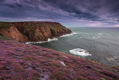 Pordenack Point in purple (snowyturner) Tags: cornwall atlantic ocean waves evening twilight heather flowers landscape summer sunset