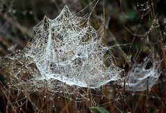 The cobweb waiting catch.. (irio.jyske) Tags: cobweb catch field forest chilly naturepictures naturephoto naturephotograph nature naturescape naturephotos naturephotographer naturepic natural naturepics autumn autumntime sunrising beauty beautiful