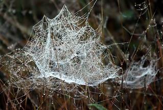 The cobweb waiting catch..