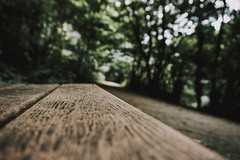 On The Bench (Capturing The Negative) Tags: sony sonyalpha a6000 sonya6000 riveracrevalley ellesmereport cheshire walk summer wirral bokeh woodland wood trees fltofb