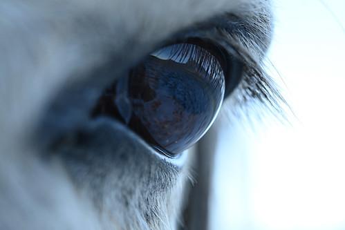 Nikon Z Sample Photo