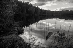 Lake (Stefano Rugolo) Tags: stefanorugolo pentax k5 pentaxk5 smcpentaxda1855mmf3556alwr ricohimaging lake water landscape monochrome kitlens sky clouds trees forest reeds reflections rock hälsingland sweden branches