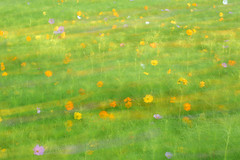 Winds of Color (arlene sopranzetti) Tags: cosmos field nj gps garden state parkway exit 137 long exposure icm intentional camera movement summer color