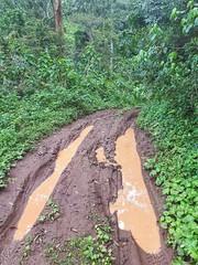 Wet tracks in Mt Kilimanjaro forest
